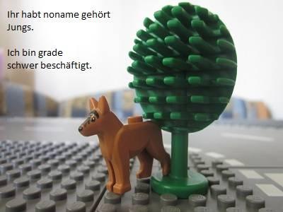 http://file1.npage.de/000039/10/bilder/801x.jpg