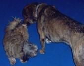 James Bond + Hundefreundin auf der Ikarus Palace der Minoan Lines von Igoumenitsa - Westgriechenland nach Venedig - Italien