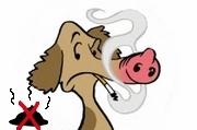 Schweinehund mit Zigarette