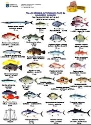 Mindestmaße Mindestgewichte Fische Insel Fuerteventura Kanaren Spanien