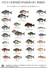 Grundarten Tafel 1 Fische Insel Fuerteventura Kanaren Spanien