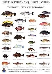 Grundarten Tafel 2 Fische Insel Fuerteventura Kanaren Spanien