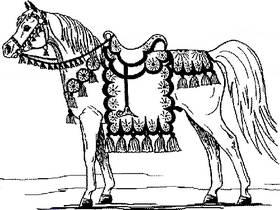 Stadt Sevilla - Provinz Sevilla - Andalusier - Spanische Pferde