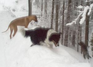 James Bond mit Hundefreunden tiefen Schnee in Österreich