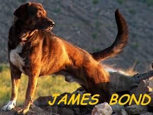 James Bond auf einer Finca in der Provinz Malaga in Andalusien Spanien