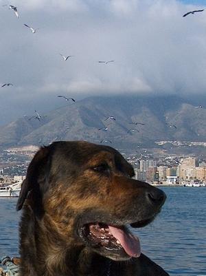 James Bond im Hafen mit Möwen von Fuengirola an der Costa del Sol in der Provinz Málaga Andalusien Spanien