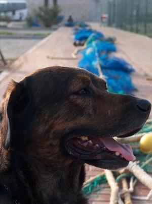 James Bond vor den Fischernetzen im Hafen von Fuengirola Costa del Sol Andalusien Spanien