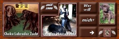 Meine Banner zum Mitnehmen / Choco-Labrador-Zucht von der Hasselfelde