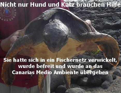Wasserschildkrötenrettung
