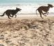 James Bond und Farah machen ein Hunderennen auf der Insel Korfu in Griechenland