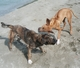 James Bond und Farah schütteln sich das Wasser aus dem Fell am Strand von Roda auf der Insel Korfu in Griechenland
