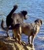 James Bond und Bobo wollen schwimmen gehen, sind aber wasserscheu. Welch ein Pech in dieser Situation.