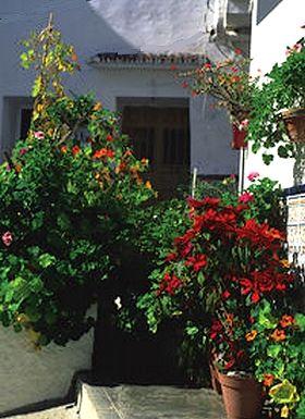weisse Haus in der Altstadt vom weissen Dorf Almogía mit roten Blumen geschmückt - Provinz Málaga - Andalusien - Spanien