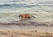james bond im Meer vor Salonikiou Beach in Chalkidiki Griechenland