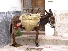Esel mit Sattel - James Bond in Monda Costa del Sol Provinz Malaga Andalusien Spanien