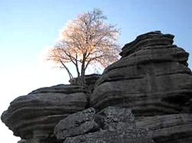 Naturschutzgebiet Felsen mit Mandelbaumaum im Naturpark El Torcal Provinz Malaga Andalusien Spanien