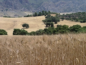 James Bond im Naturpark Sierra de las Nieves Provinz Malaga Andalusien Spanien
