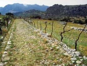 Naturpark Sierra de Grazalema - Provinz Cádiz - Andalusien - Spanien