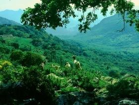 Ziegen in der Sierra de Grazalema - Provinz Cadiz - Andalusien - Spanien