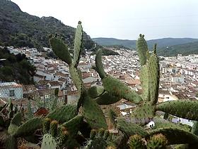 James Bond Hund - Das weisse Dorf - Ubrique - Provinz Cádiz - Andalusien - Spanien
