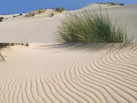 Sanddünen im Nationalpark Coto de Doñana - Costa de la Luz - Provinz Huelva - Andalusien - Spanien