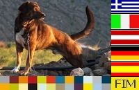 Button James Bond - Mit Hund auf Reisen in Europa Online-Marketing Ideen-Werkstatt Fim Las Palmas