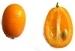 Zwergorangen Kumquat - Früchte Finca-Villa Sol y Fruta Jete Provinz Granada Andalusien Spanien verkaufen