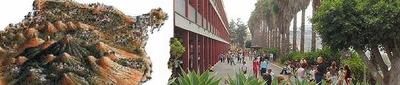 Deutsche Schule Las Palmas de Gran Canaria - Kanaren - Spanien