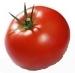 Tomaten - Früchte Cortijoo-Finca Sol Jete Provinz Granada Andalusien Spanien verkaufen
