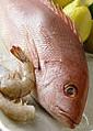 Fisch-Hitparade - Deutsches Anglerforum - La Rioja - Spanien