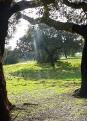 Naturpark Cornalvo - Extremadura - Spanien
