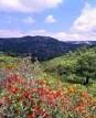 Naturpark - Sierra de Irta - Comunidad Valenciana - Spanien
