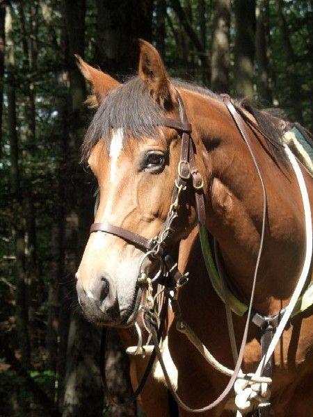 plötzlich aggressives verhalten pferd