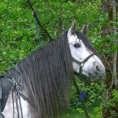pferde beschlagen oder nicht