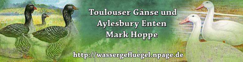 Züchter Mark Hoppe stellt seine Wassergeflügelzucht  vor.