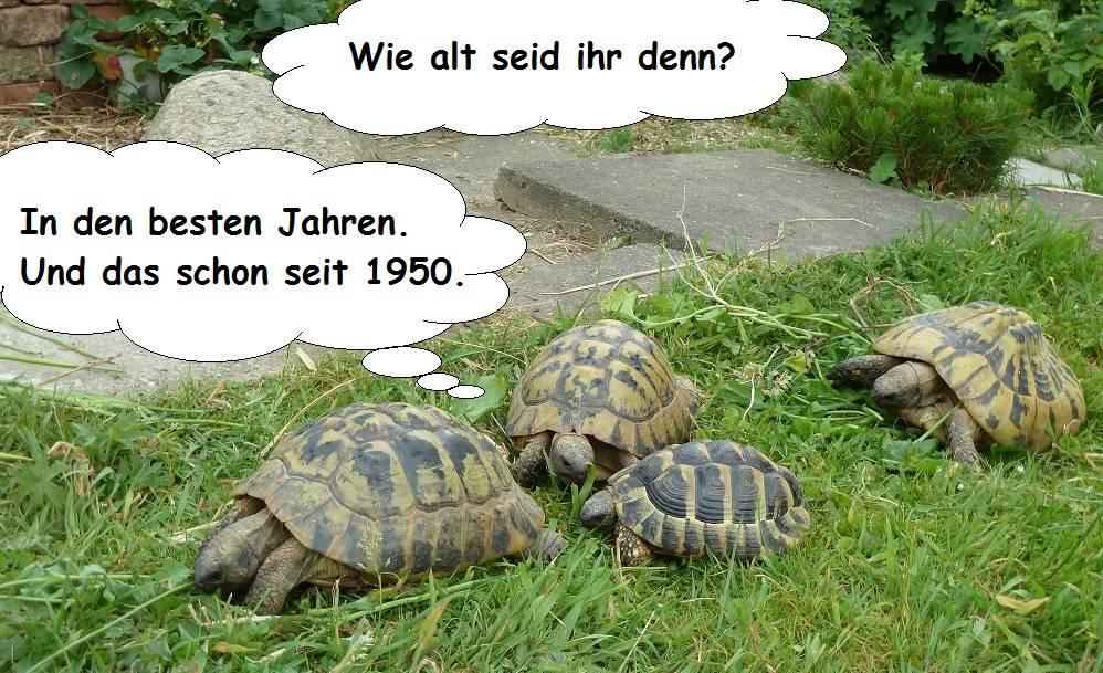 Wie Alt Werden Schildkröten
