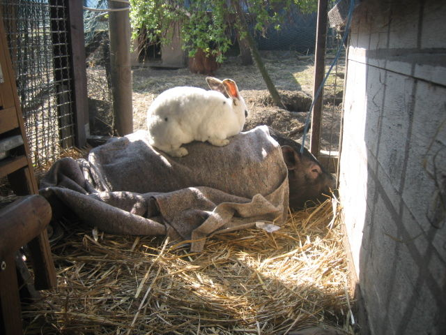 Henry mit Kaninchen auf seinem Rücken