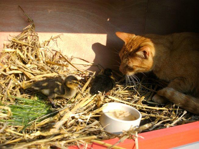Emil, Emma und Katze Poldi