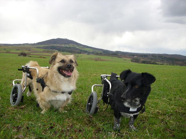 Handicap-Hunde, Rollstuhl für hunde