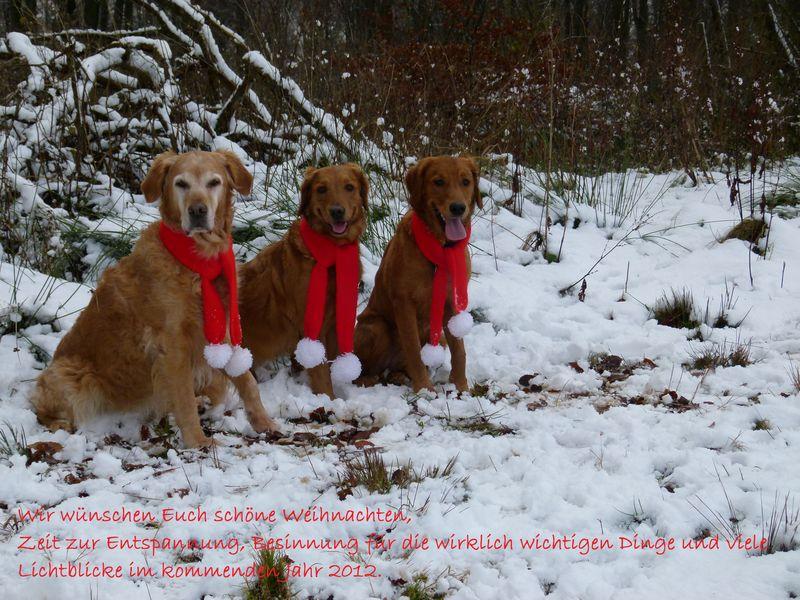 Weihnachtsgrüße Jagdlich.Working Golden Retriever Kennel Rushhunters Alpina