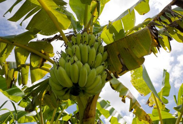 Nicht alles Banane
