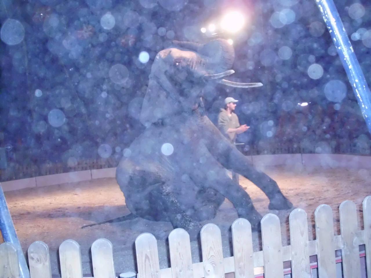 Orbse ausgelöst durch den Trainer der Elefanten, der eine Nahtoderfahrung hatte