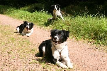 Hundis beim Wandern