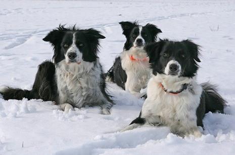 Bess, Ashley & Val