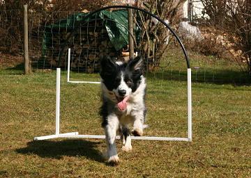 Bess beim NADAC Hoopers-Training