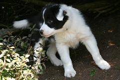 Salley (Bad Urach; Agility + Spürhundeausbildung)