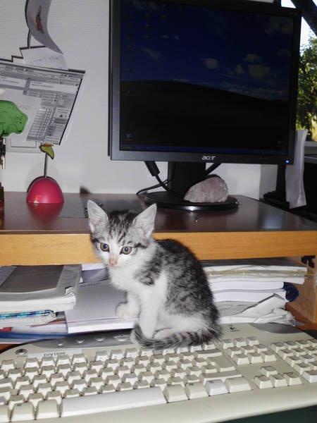 kleiner Hugo auf Tastatur