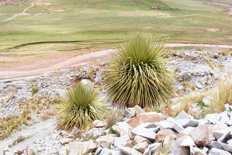 Punia Raimondi bei Comanche in der Nähe von La Paz