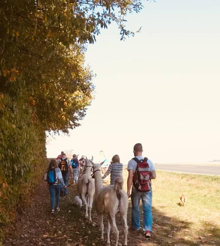 Familienwandertag mit Lamas in Thüringen Unstruthainich Erfurt