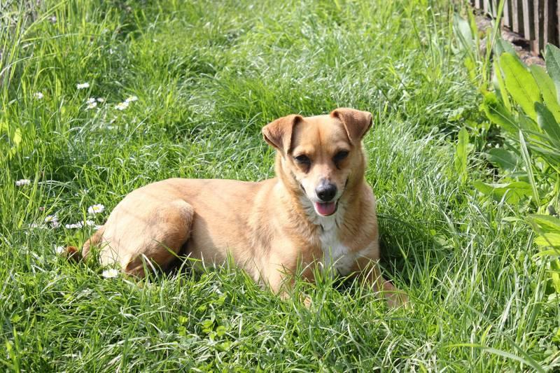 Therapiehund Tiertherapie mit Hund